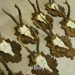 9 Piece Original Old Antique Deer Antlers With Long Nose Deer Antler On Signs