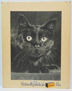 Rare Old Antique Vintage 1950s KODAK FILM ADVERTISING SIGN BLACK CAT HALLOWEEN